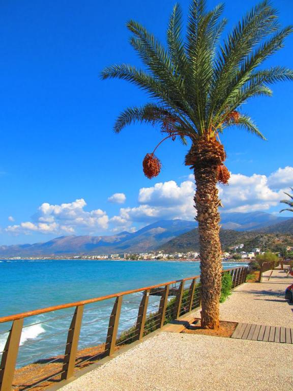 maistrali-apartments stalis beach crete location 784a4-1ab46-maistrali_apartments_stalis_palm_tree.jpg